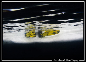 My buddy's fins ... hesitation because of the 3&#176;C in the ... by Raoul Caprez 